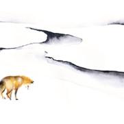 La quête du renard~Livre d'images