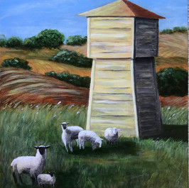 Sonoma Sheep by Betsy Timm