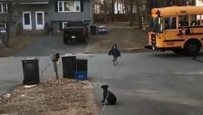 Σκύλος περιμένει τον ιδιοκτήτη του να επιστρέψει από το σχολείο!