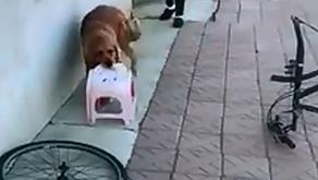 O καλύτερος φίλος…