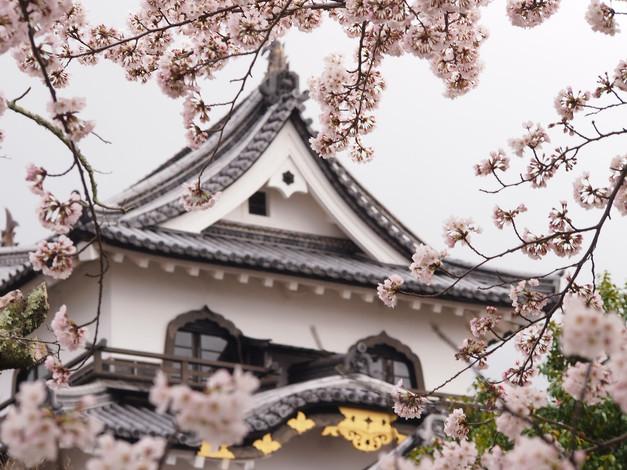 03. Hikone Castle, Hikone.jpg