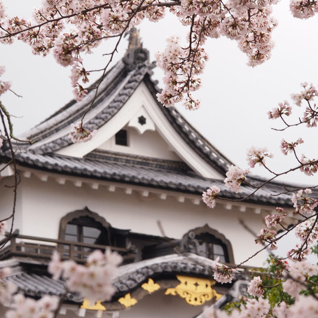 Japan in Cherry Blossom