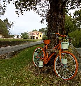bici_de_frente2.jpg