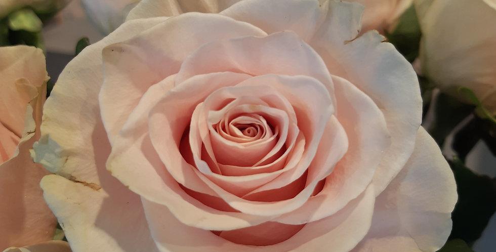 Rose a la pièce Sweetness - Rivieraflor Livraison Genève