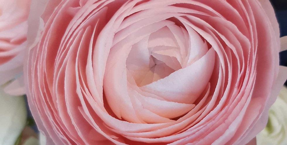 Renoncule a la pièce, fleurs de saison - Rivieraflor Livraison Genève