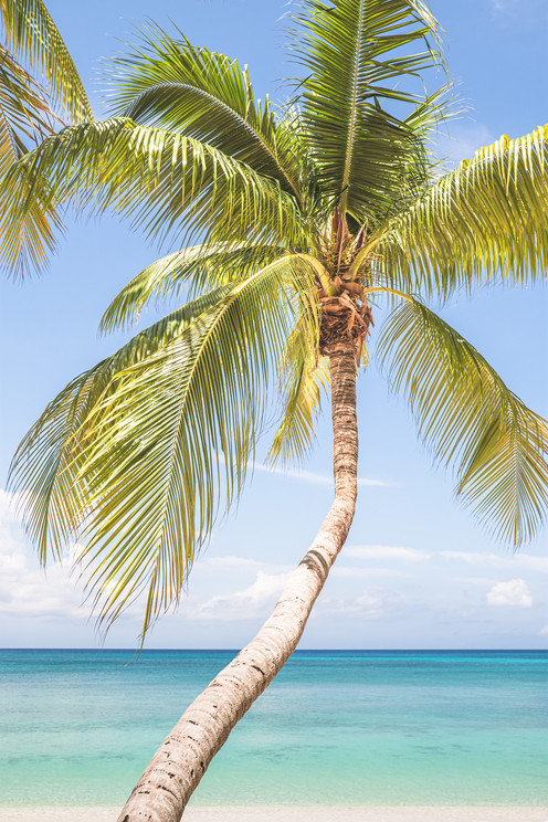 Palm Trees-6.jpg