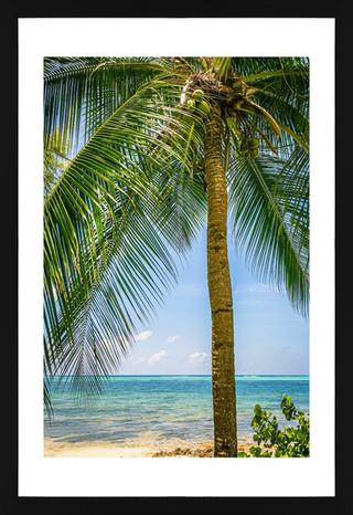 East End Palm