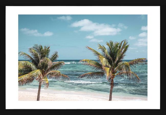 North Side Palms