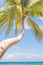Palm Trees-7.jpg