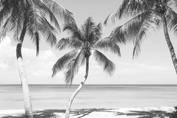 Palm Trees-4.jpg