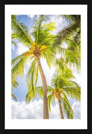 Cayman Kai Palms