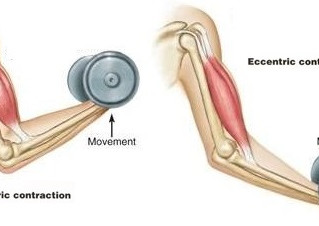 The Benefits of Eccentric Muscle Contraction