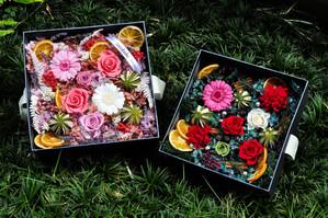 cocobolo 2016 品牌恆星花盒【香味森林】系列