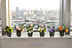cocobolo商業展示 🍃 VILLA LOHERB樂健活 日光綠築 設計案例分享