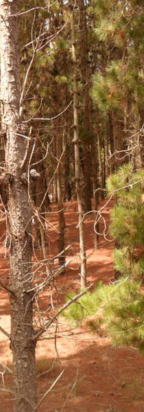 el bosque donde compuse.
