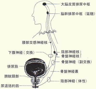 脊髄損傷と排尿障害.jpg