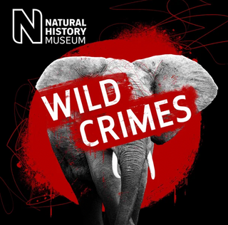 Wild Crimes Podcast