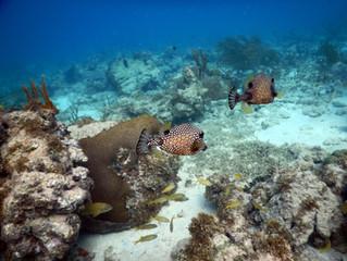 Tobago Cays, Clifton Harbour, Petit Saint Vincent
