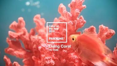Living Coral: El color Pantone para este 2019