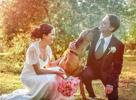 Así puedes incluir a tu mascota en tu matrimonio
