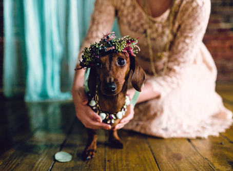 Cómo incluir a tus mascotas en tu matrimonio