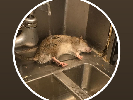 Girl Gone Local: Rats at Betty Boop Diner in Albany, says former employee