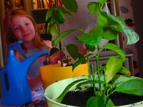 Rośliny – sprzymierzeńcem w wychowywaniu dzieci