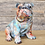 Thumbnail: Bulldog