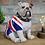 Thumbnail: British Bulldog