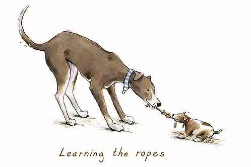 Learning the ropes Trumpers World Card