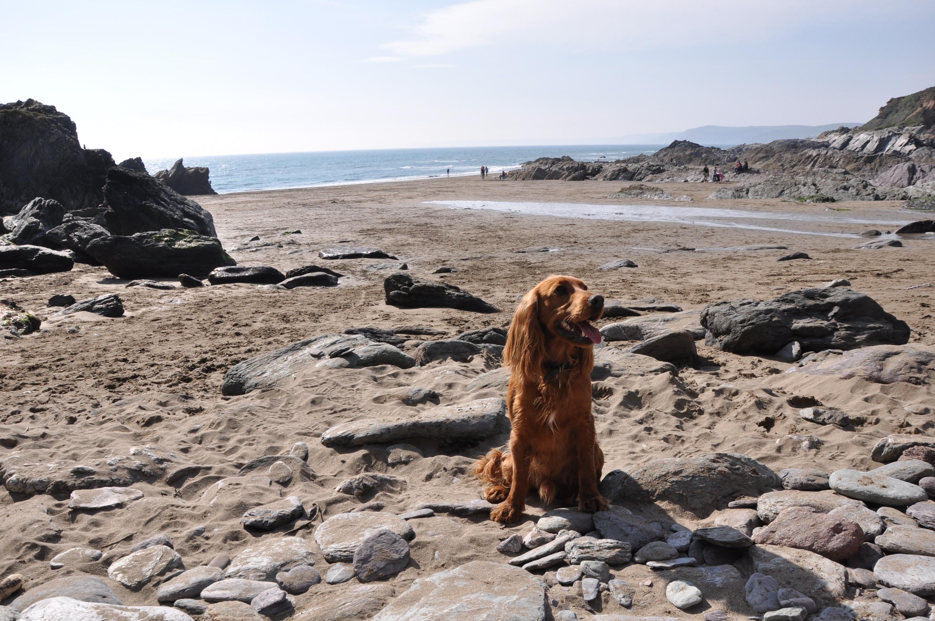 Freathy Beach