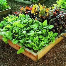 The fruit & vegetable garden