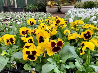 Fall Seasonal Color for the Garden