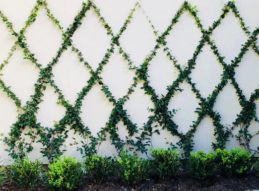 Utilizing Blank Space with English Ivy