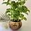 Thumbnail: Growconut - Plant Pot
