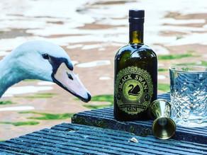 Black Swan Gin: nieuwe en unieke gin met Brugse kruiden