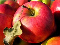 appel bergkvara