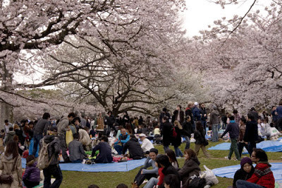 Join us for Hanami 2014!