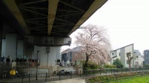 SSAJ Trip to Jindaiji(深大寺)