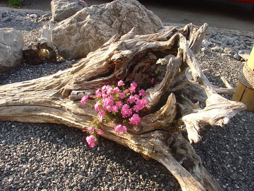 Blume im Stamm 12.JPG