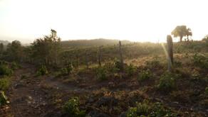Un día de COVID en territorio maya