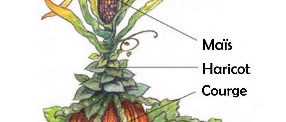 Perma et compagnonnage 1/3 : les plantes potagères