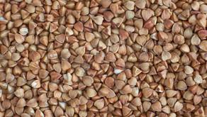 Préservation de semences du patrimoine : une question de survie