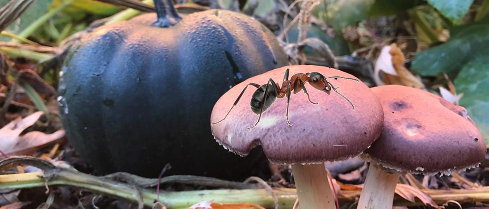 Perma et compagnonnage 2/3 : Champignons et insectes