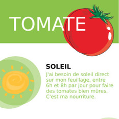 Tomate%20face%20A_edited.jpg