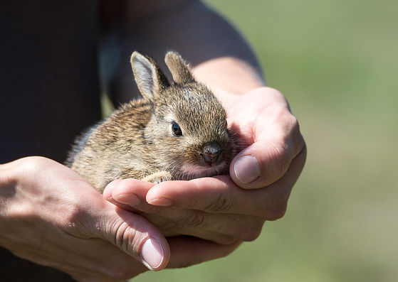rabbit-913550_1920.jpg