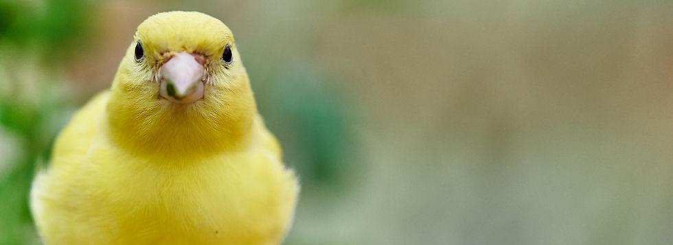 bird-3386323_1920_edited.jpg