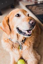 garde et promenade de chien