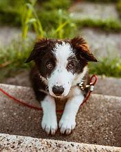 balade de chien dans votre quartier