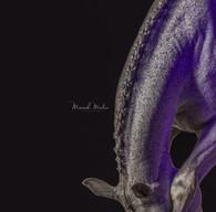 Zowie purple IG.jpg